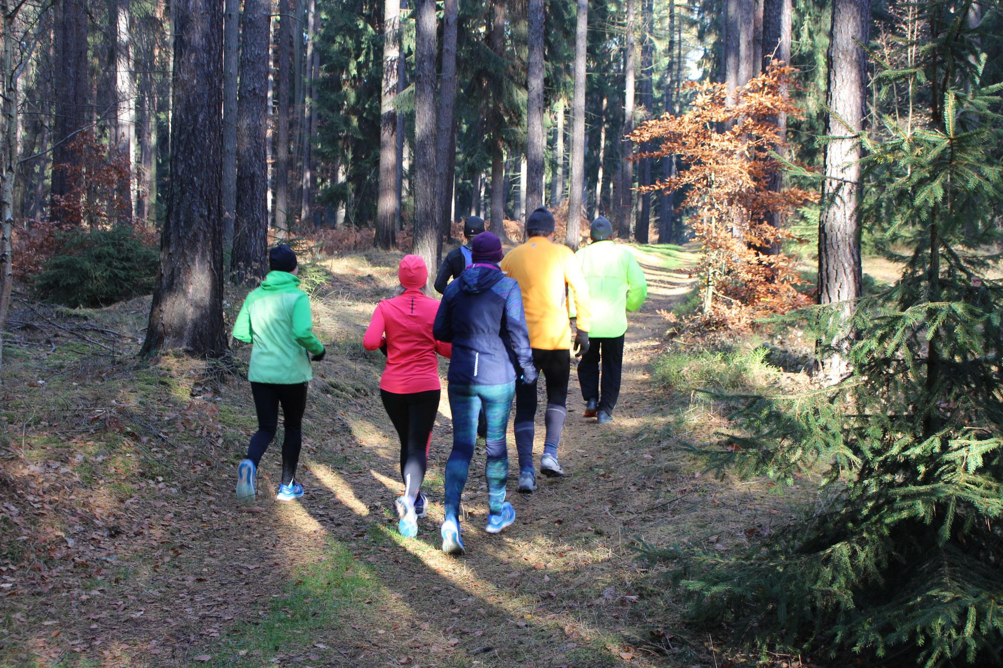 Warum ist das Laufen im Wald so gesund? Teil 1 von 2