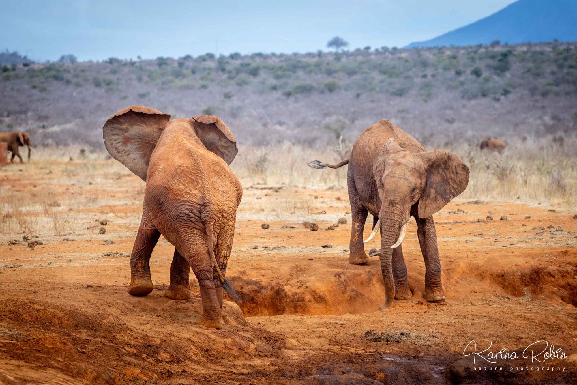 Kenyan safari, part one: TSAVO EAST