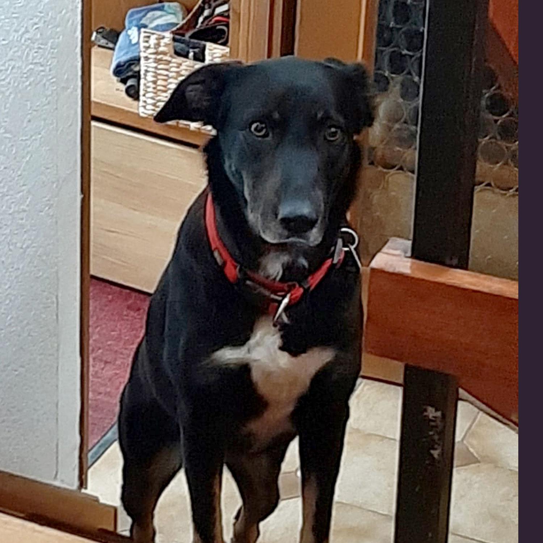 Leila hat in Deutschland ein Zuhause gefunden