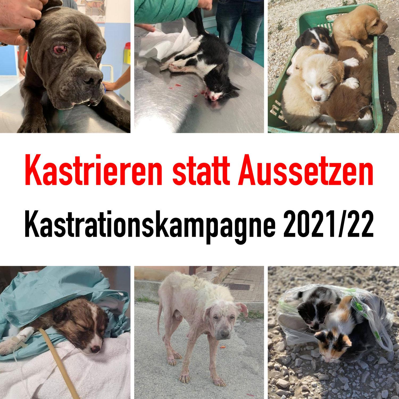 Kastrationskampagne 2021/22