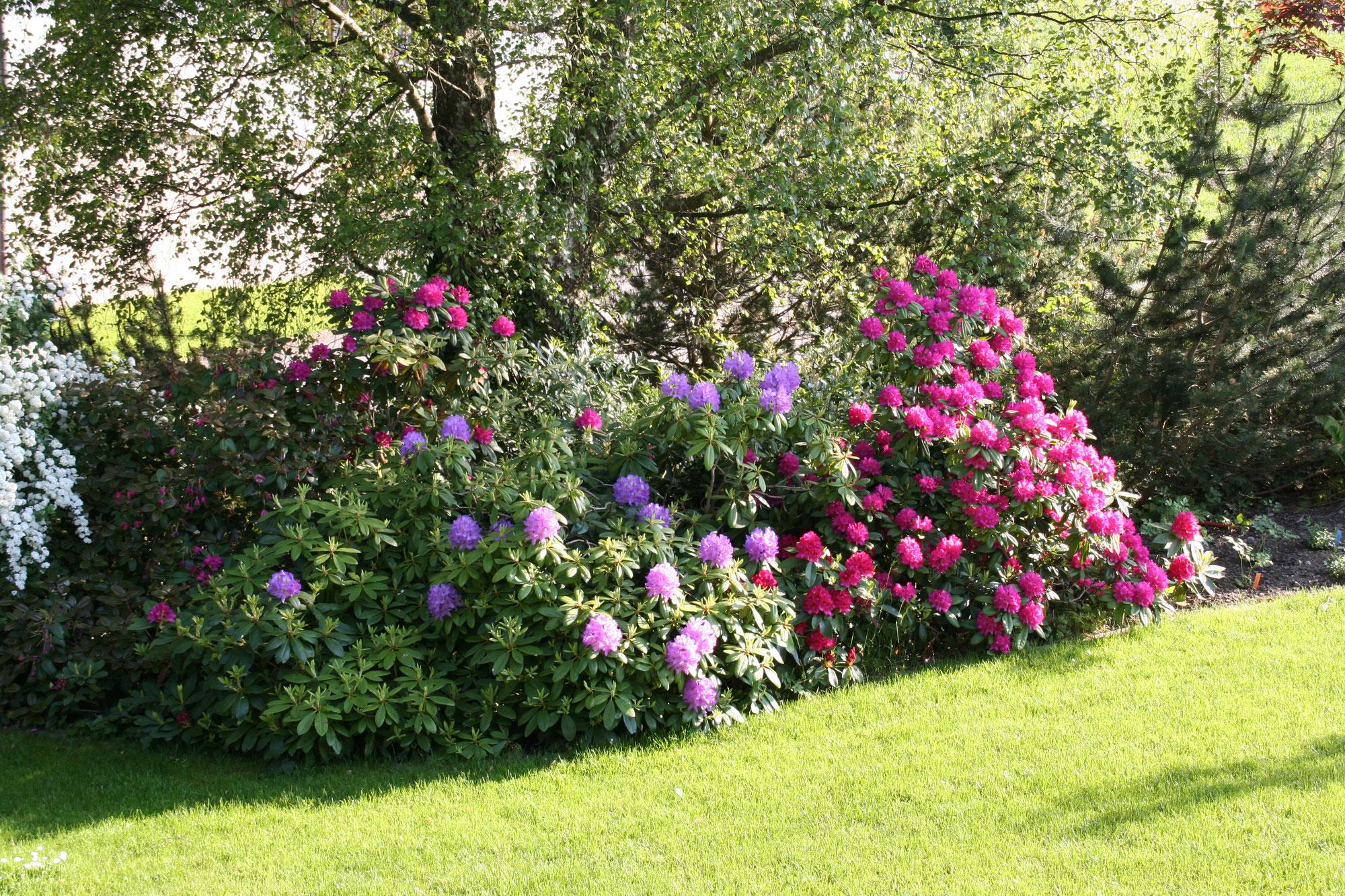 Menu huwiler gartengestaltung buttwil for Gartengestaltung 2000qm