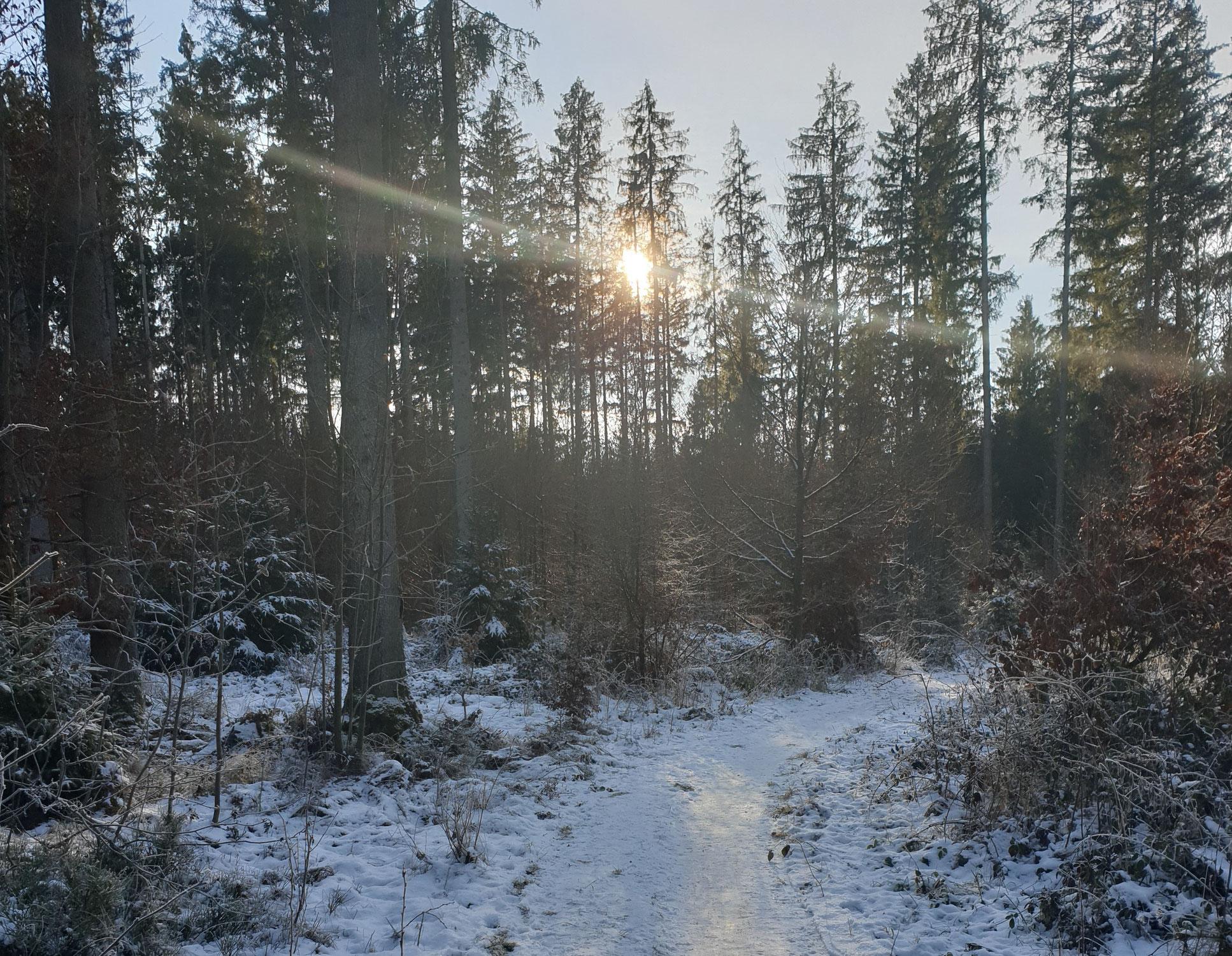 Waldesstille - Winterwonne