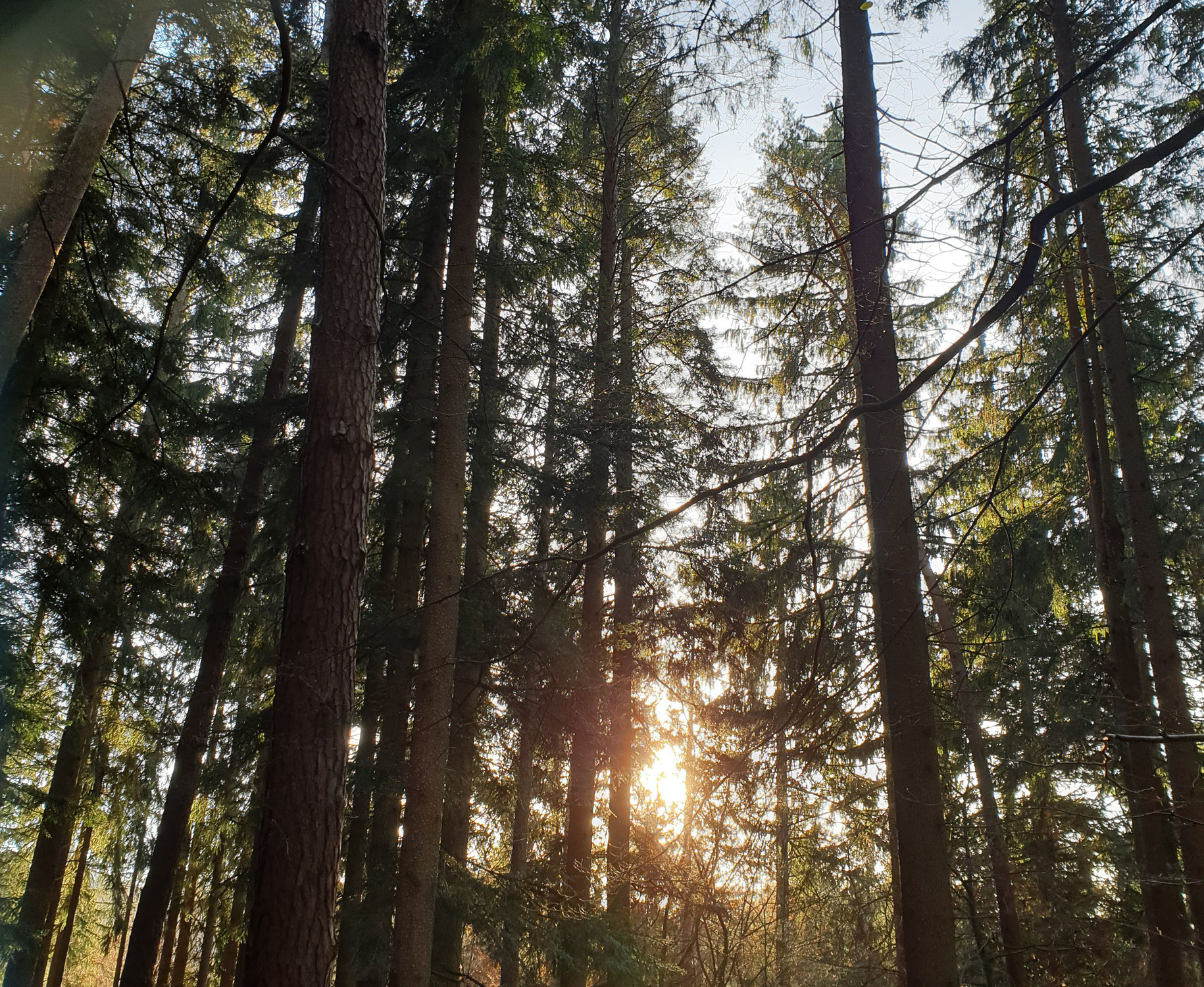 Waldzauber - wir sind nicht getrennt!