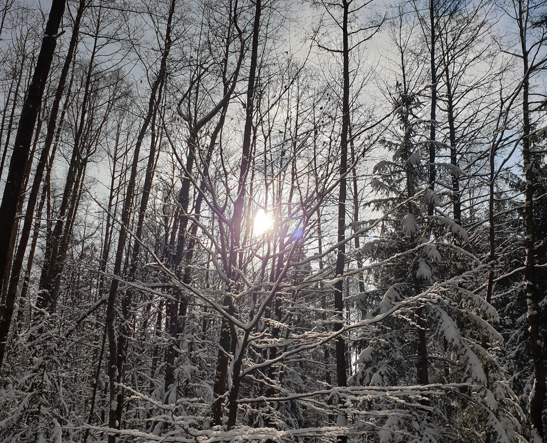Herzensangelegenheit Wald