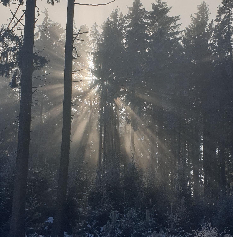 Winterglanz - Rückkehr des Lichts