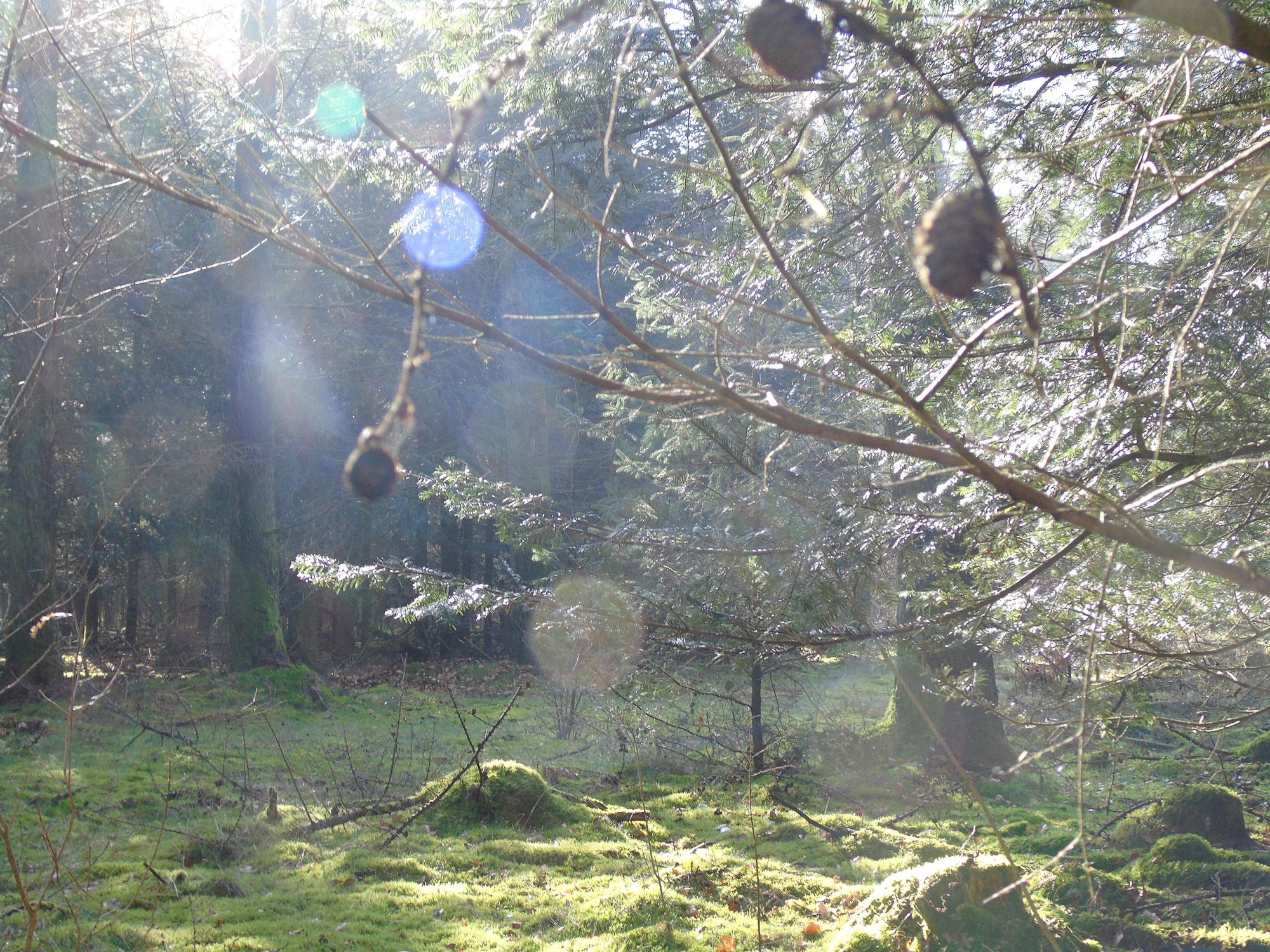 Ostersonntag - Die Auferstehung und die Rückkehr des Lichts