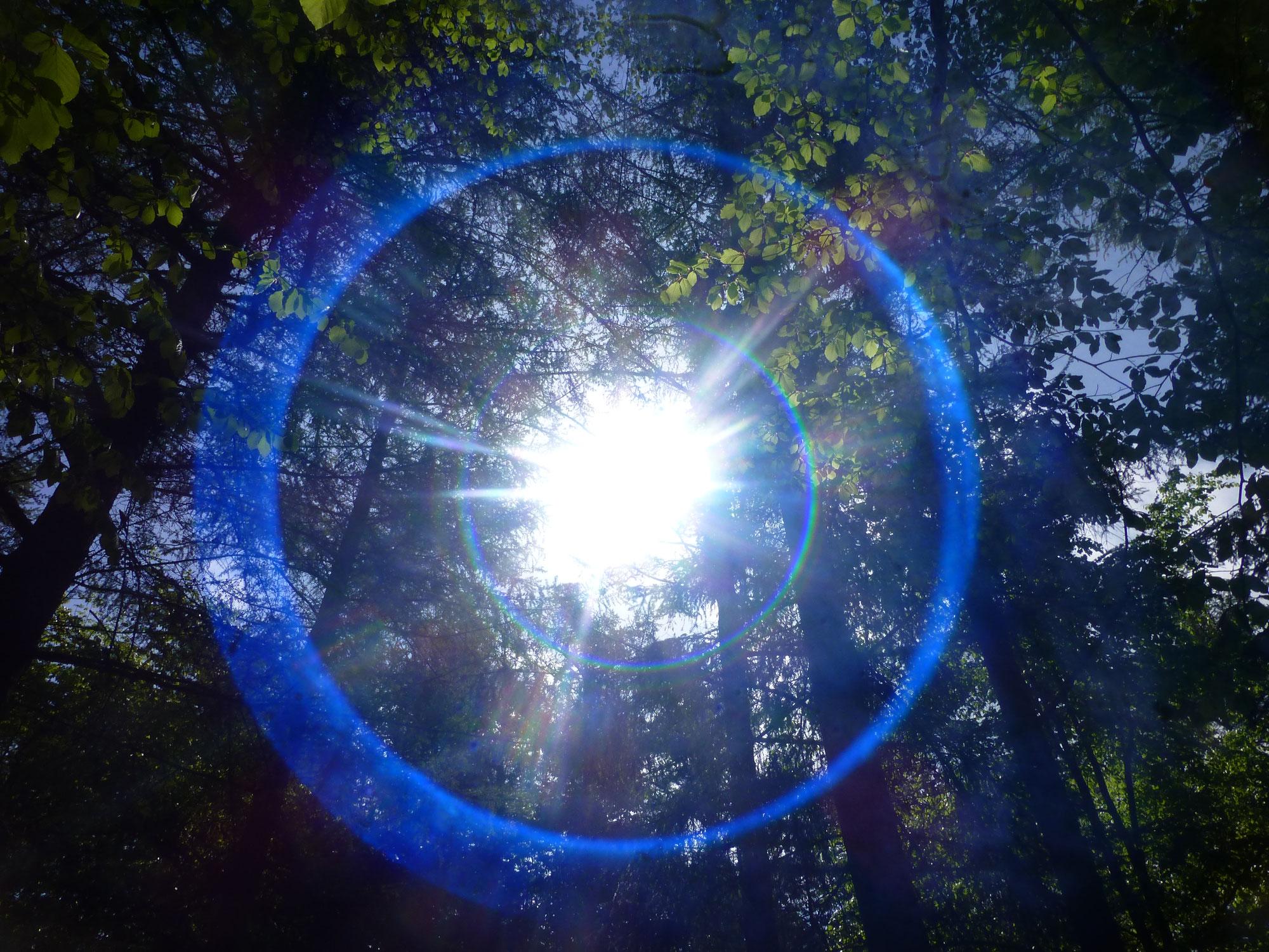 Waldspaziergang am Freitag - 21
