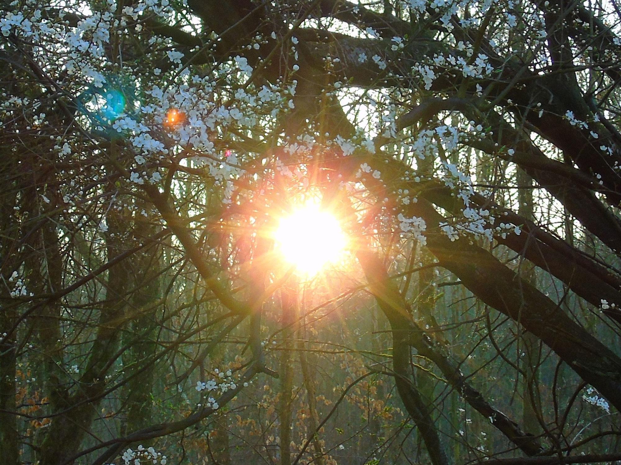 Waldspaziergang am Freitag -  16
