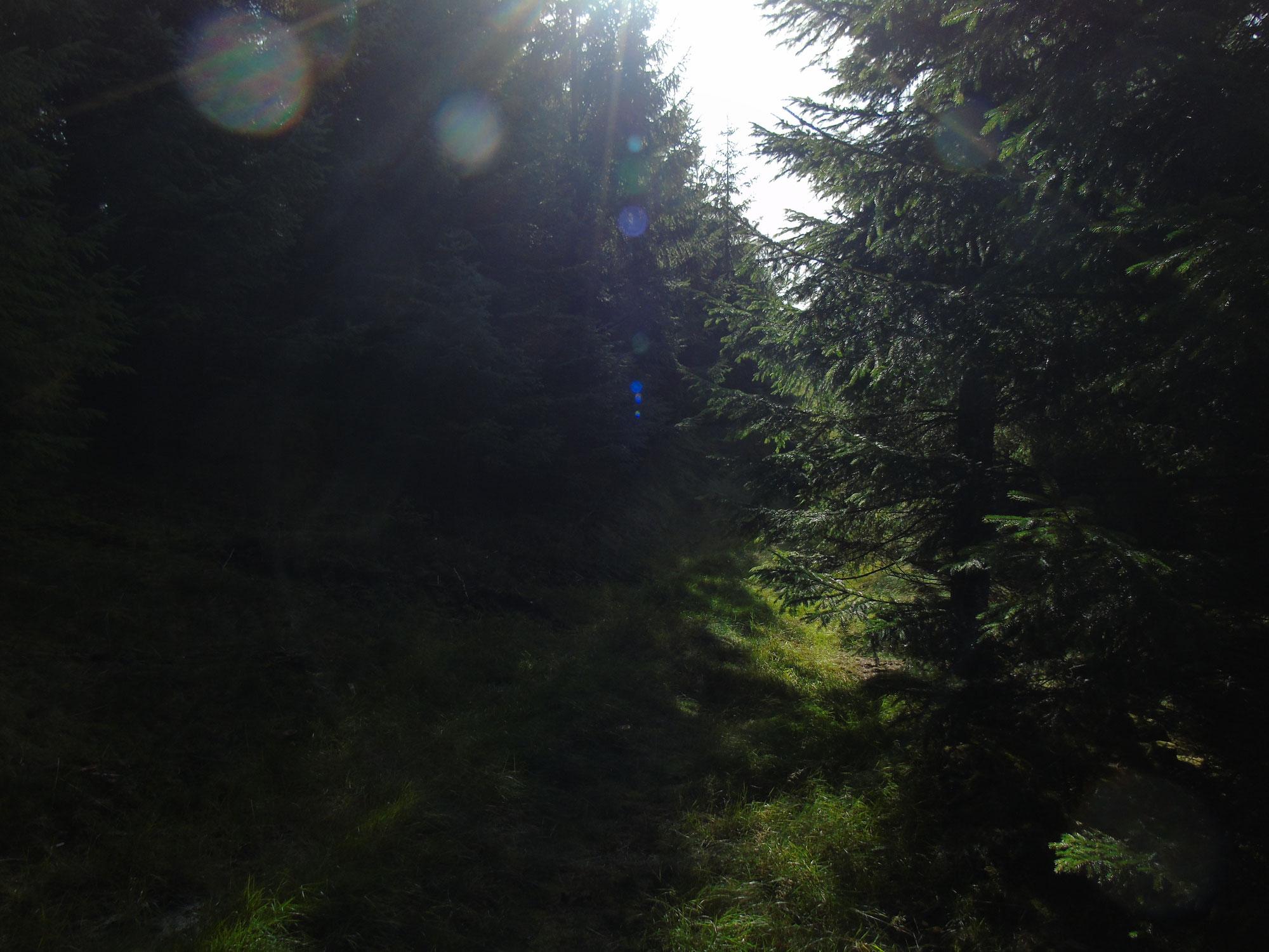 Waldspaziergang am Freitag - 19