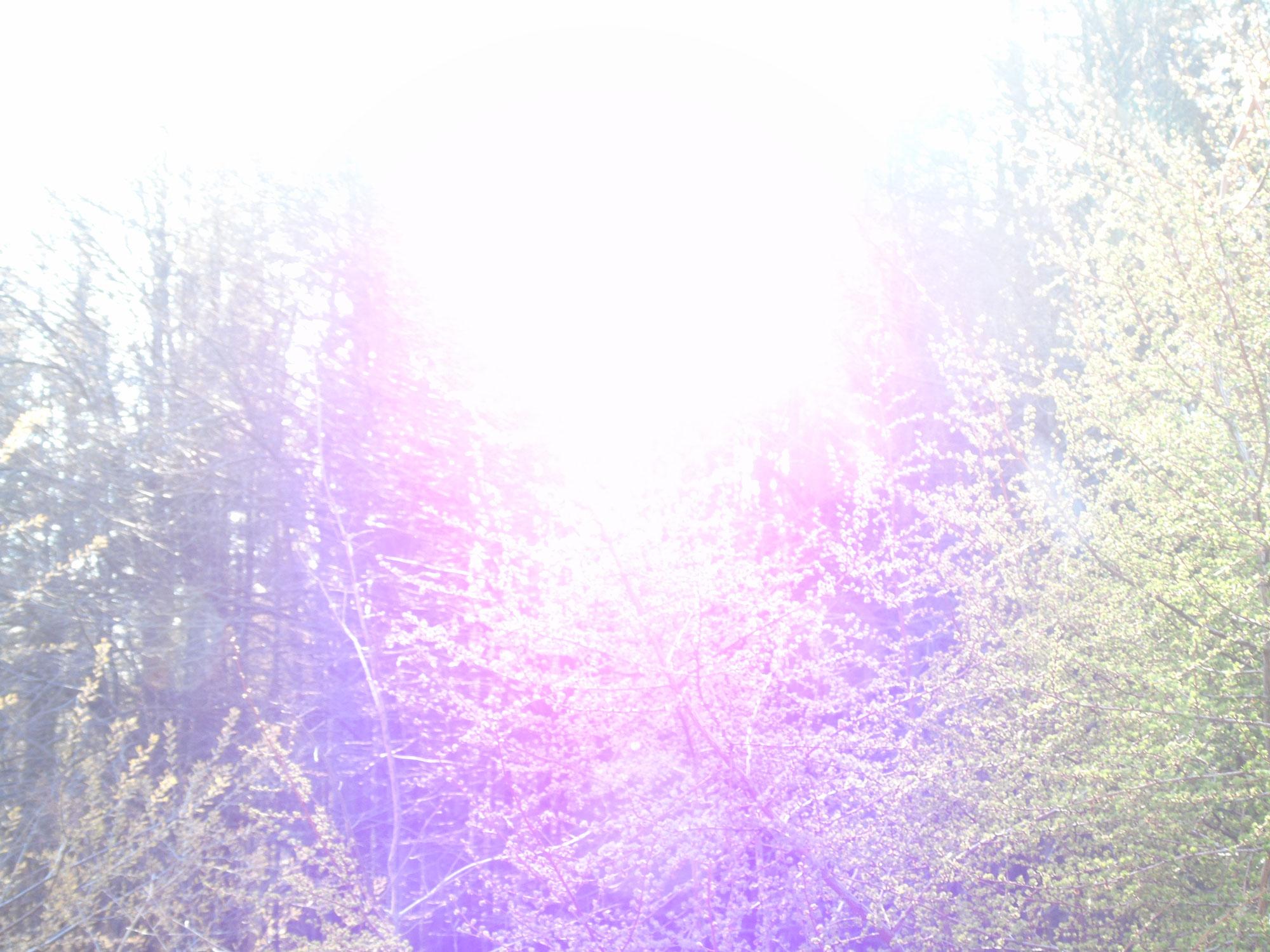Waldspaziergang am Freitag - 18