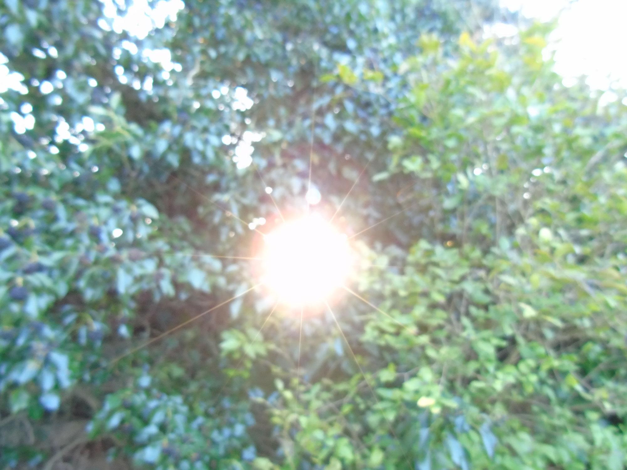 Öffne Dich für Wunder - oder: Lebenselixier Licht, Teil 4