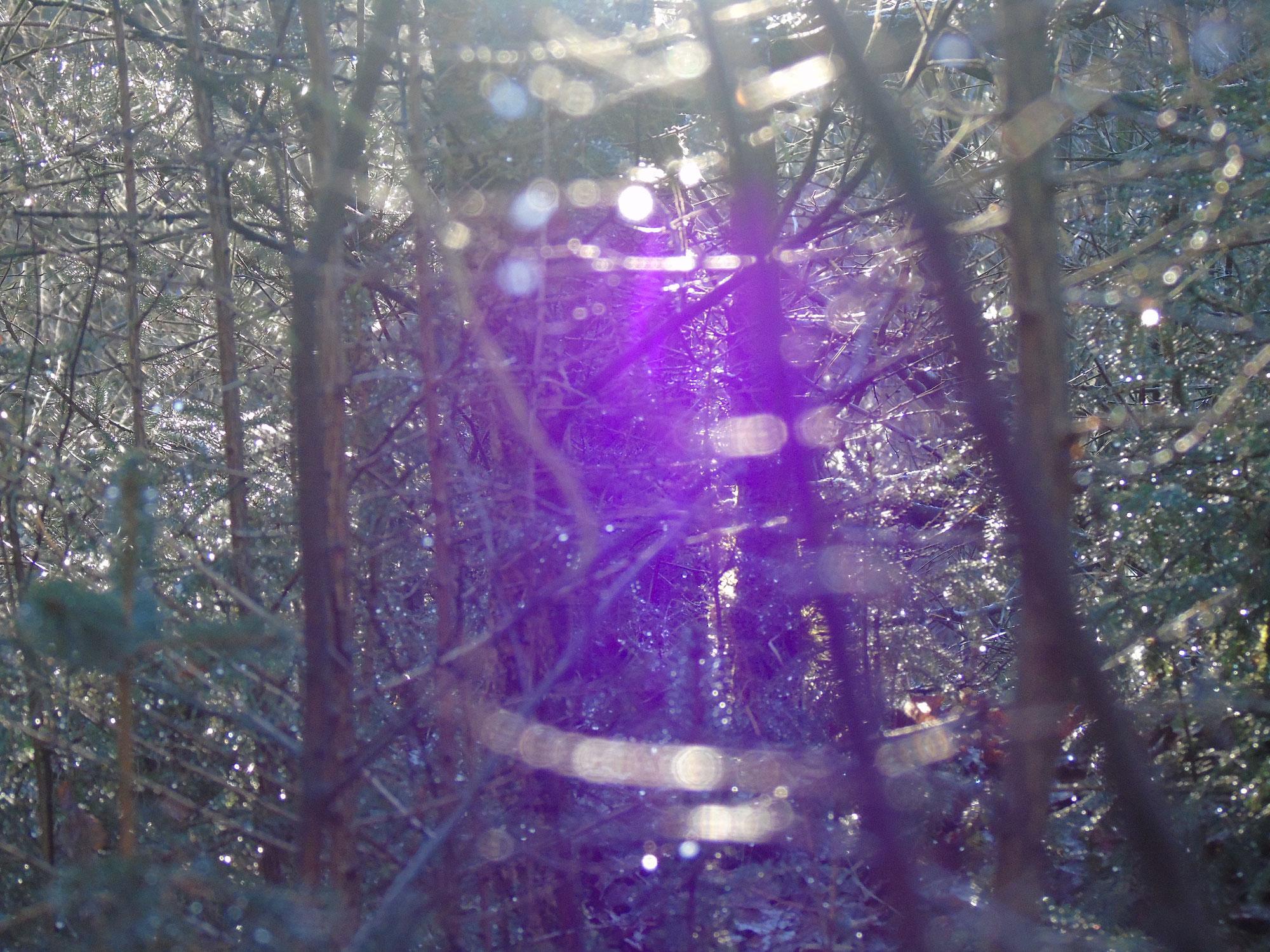 Waldspaziergang am Freitag
