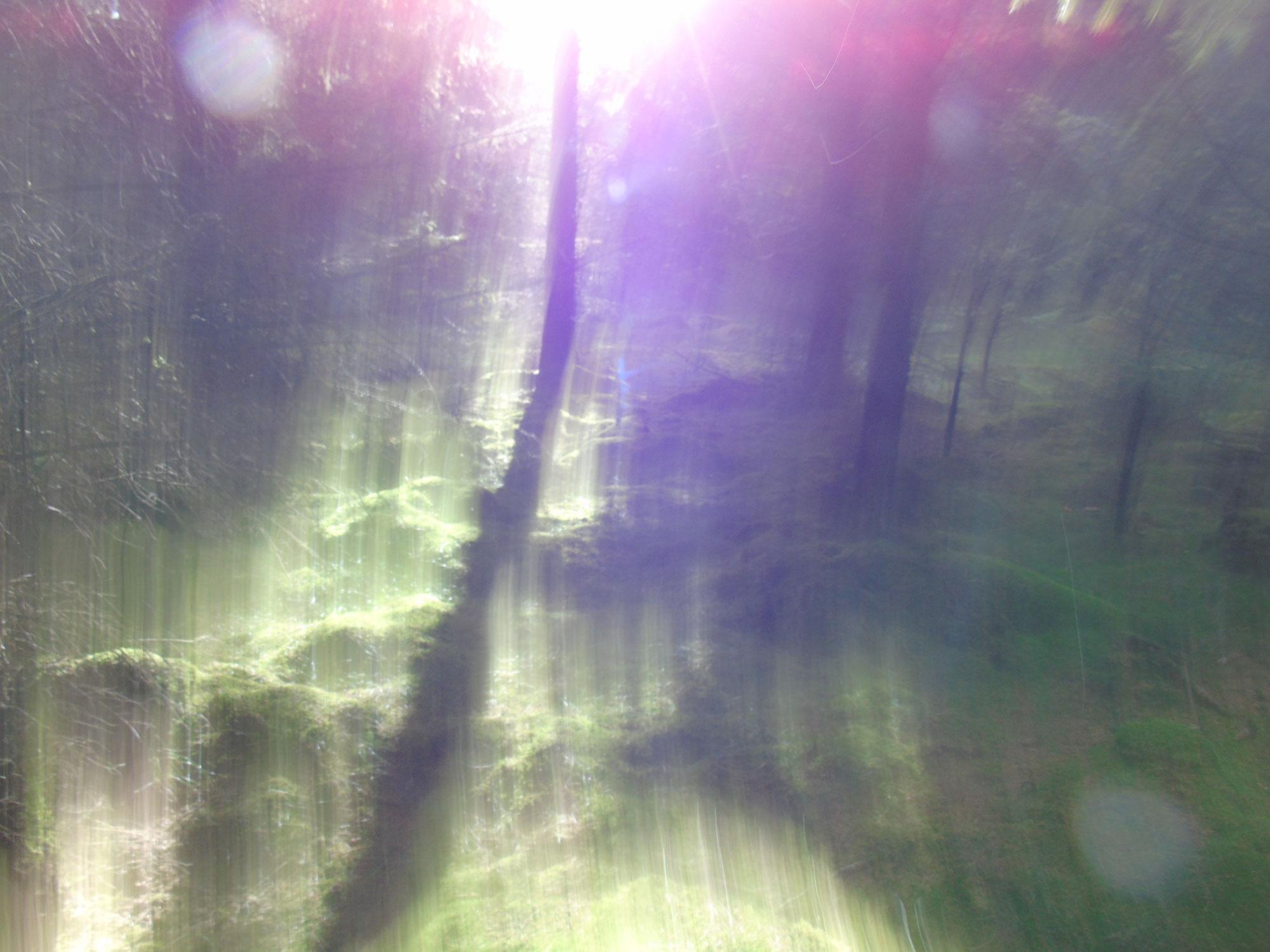 Waldspaziergang am Freitag -39