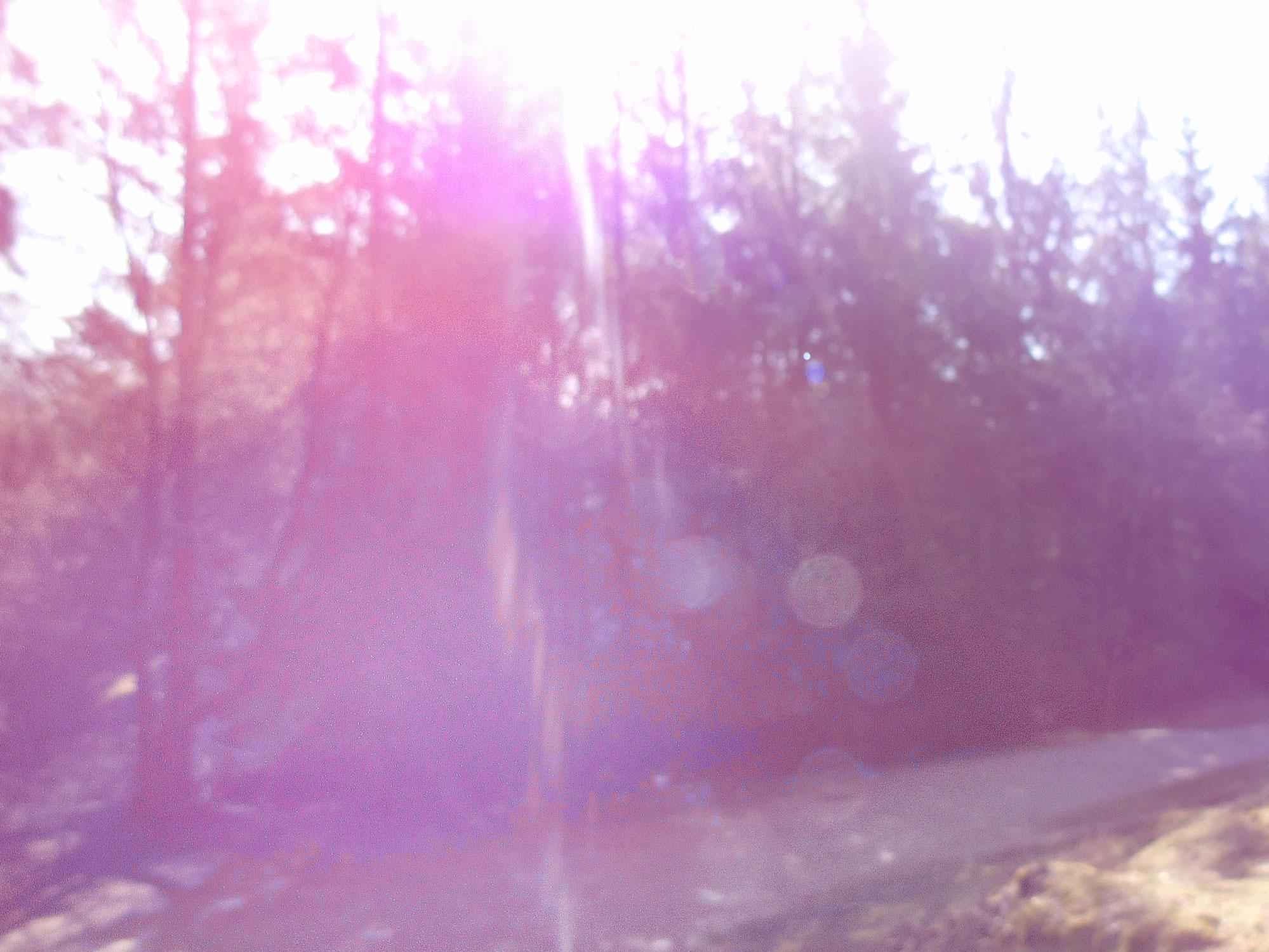 Waldspaziergang am Freitag - 17