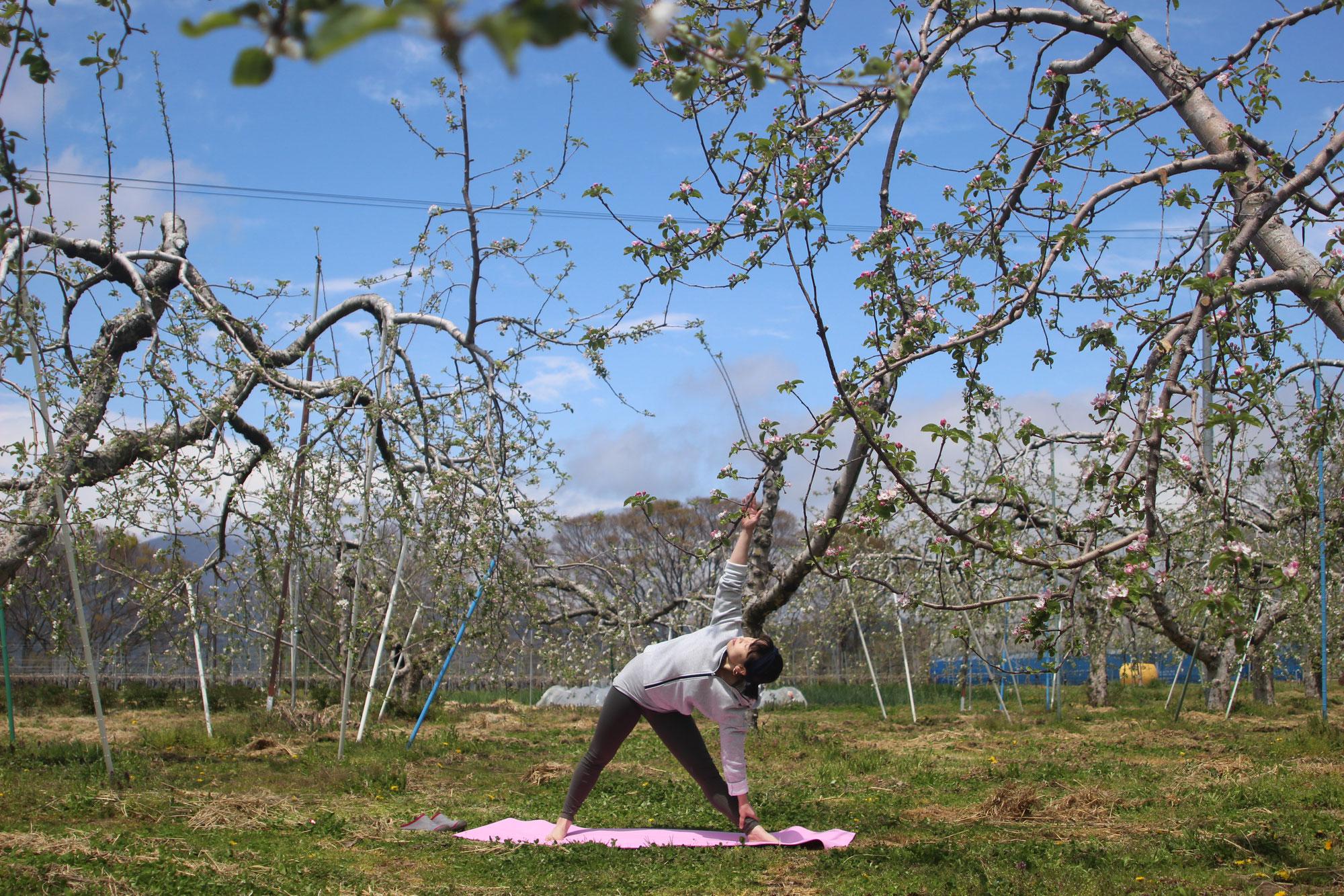 畑ヨガ りんごの花