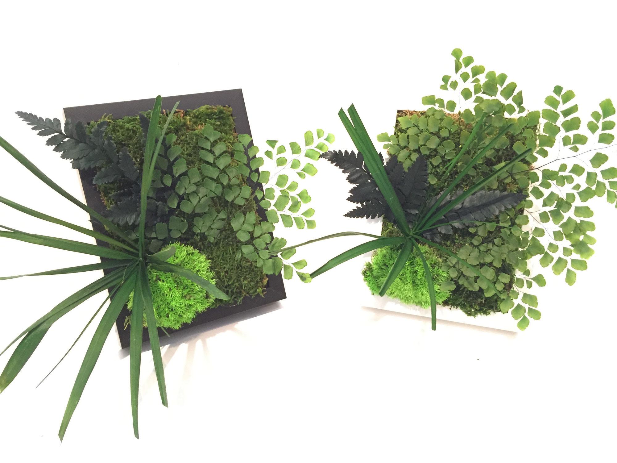 tableaux petit format vegetal indoor mur v g tal stabilis. Black Bedroom Furniture Sets. Home Design Ideas