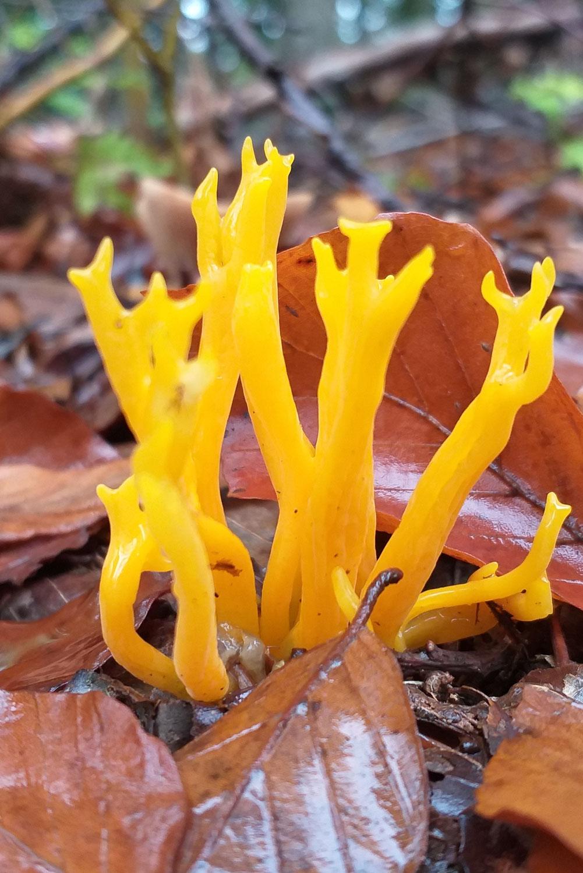 Einführung in die Welt der Pilze