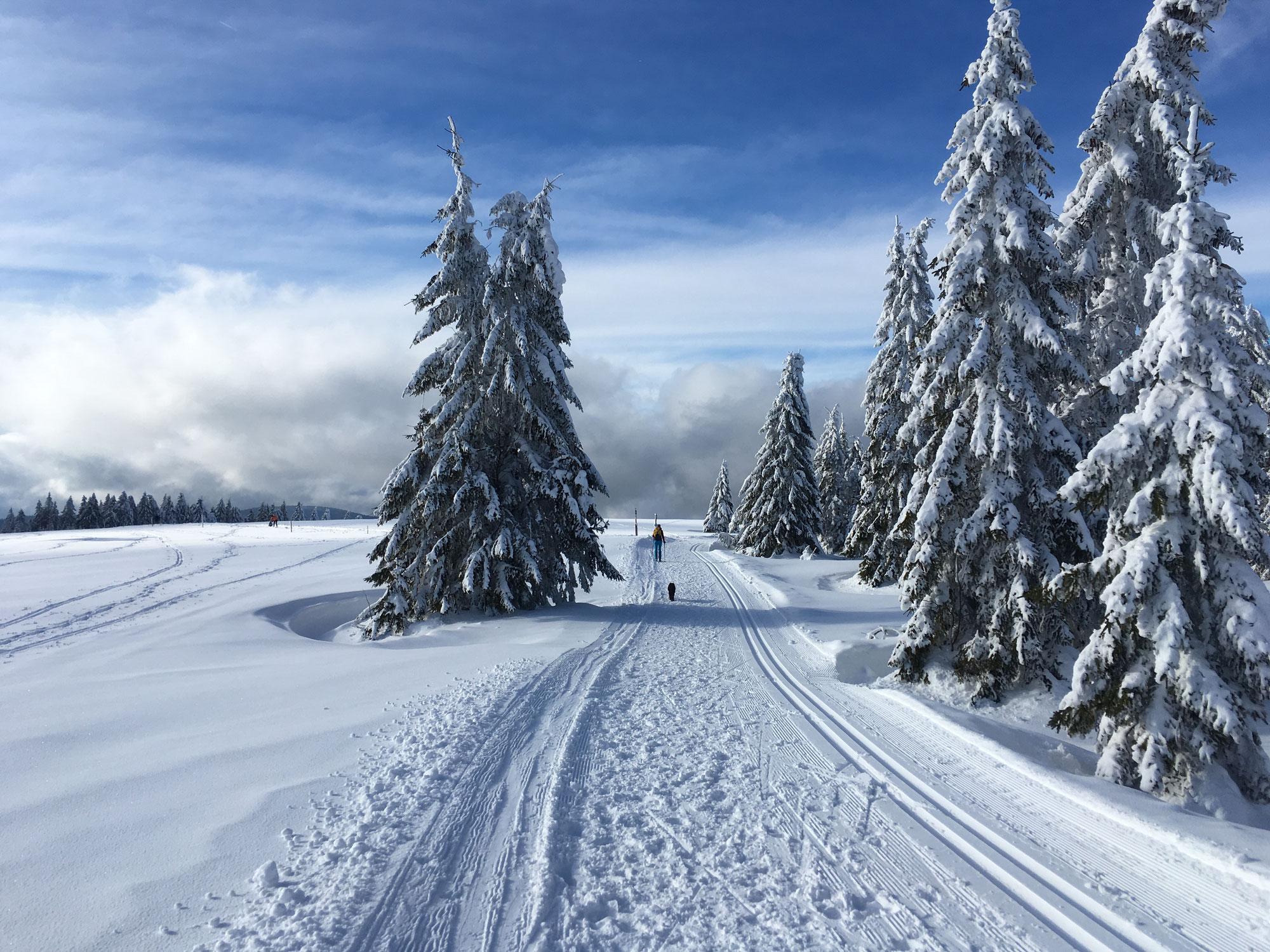 Schwarzwald. Verschneit. Wunderschön.
