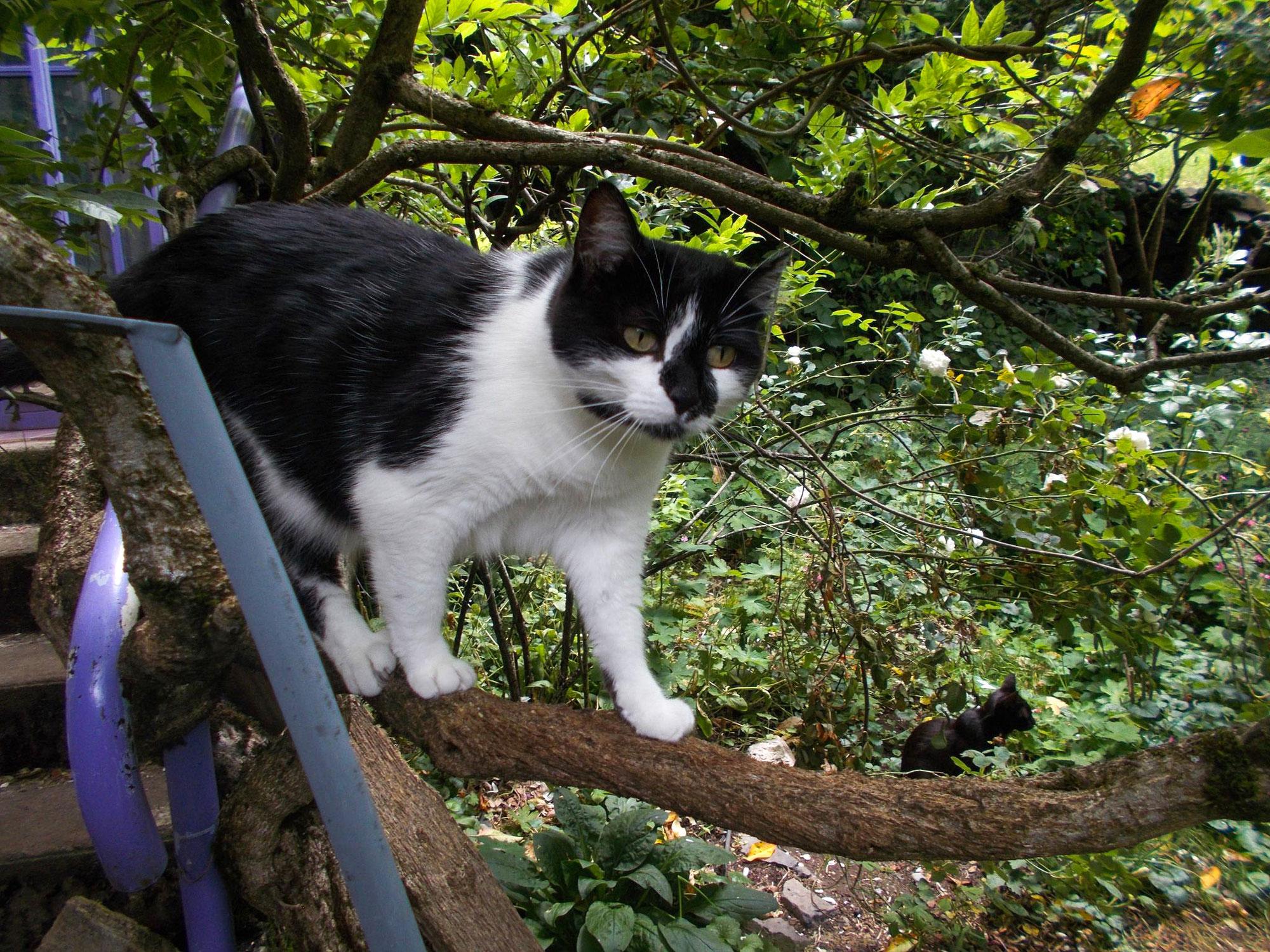Histoire de chat dans un arbre