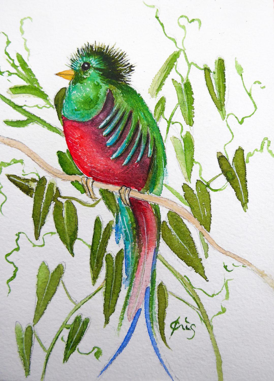 Aquarelles oiseaux du printemps 2021
