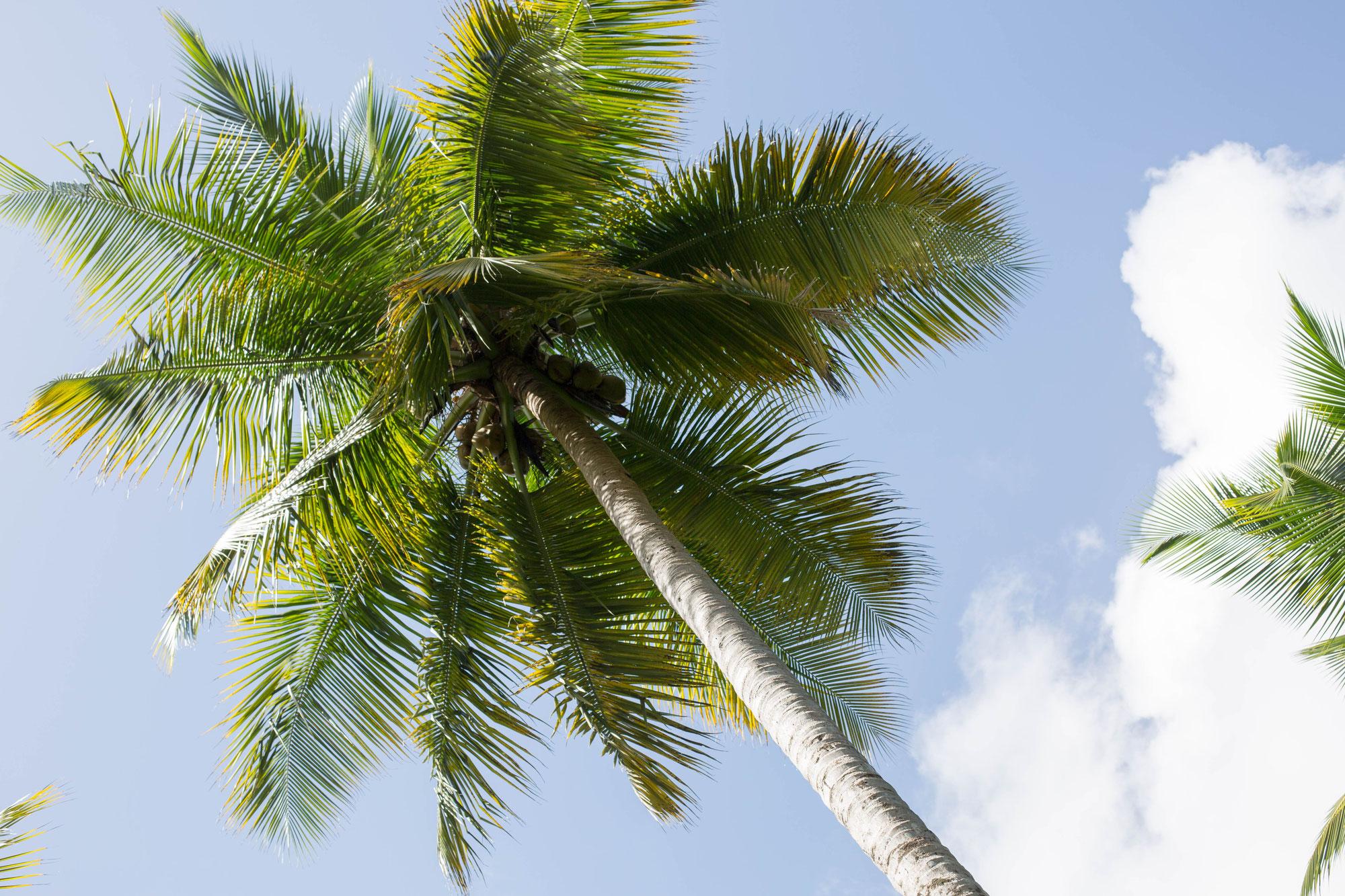 Follow me to... Dominikanische Republik