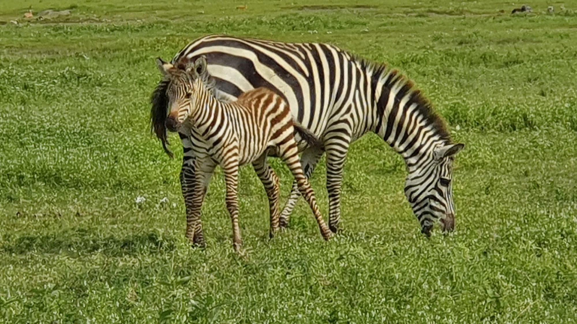 Tansania - (Zelt-) Safari und Meer