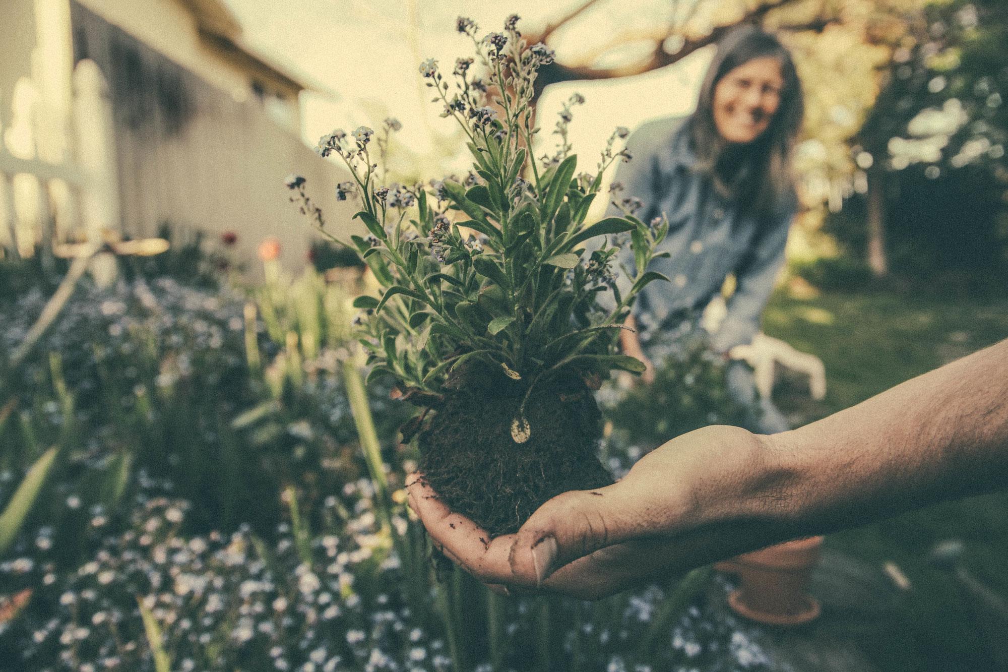 Garten-Tipps für den September