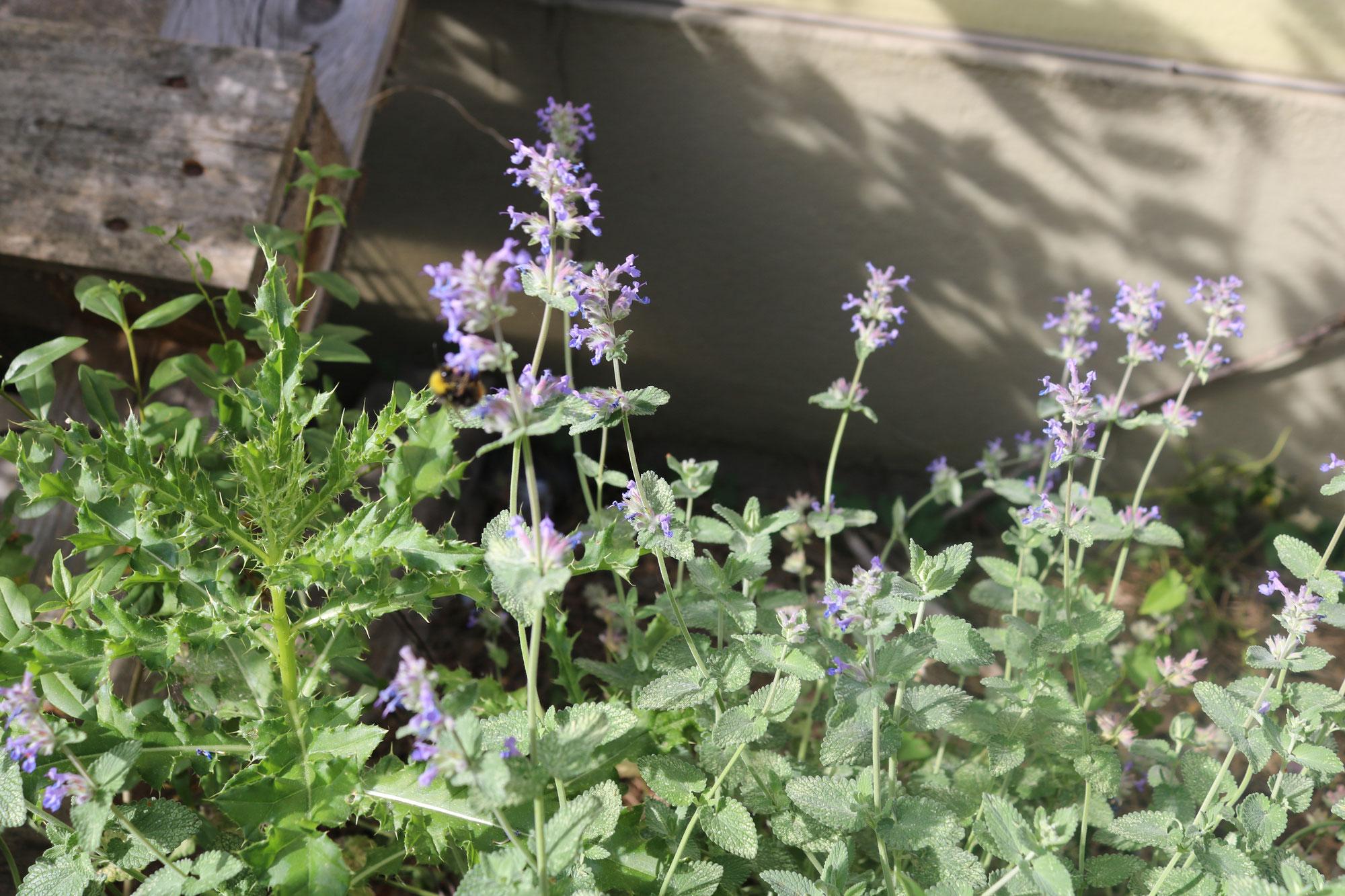 Blühwiesen durch Kaninchenzucht