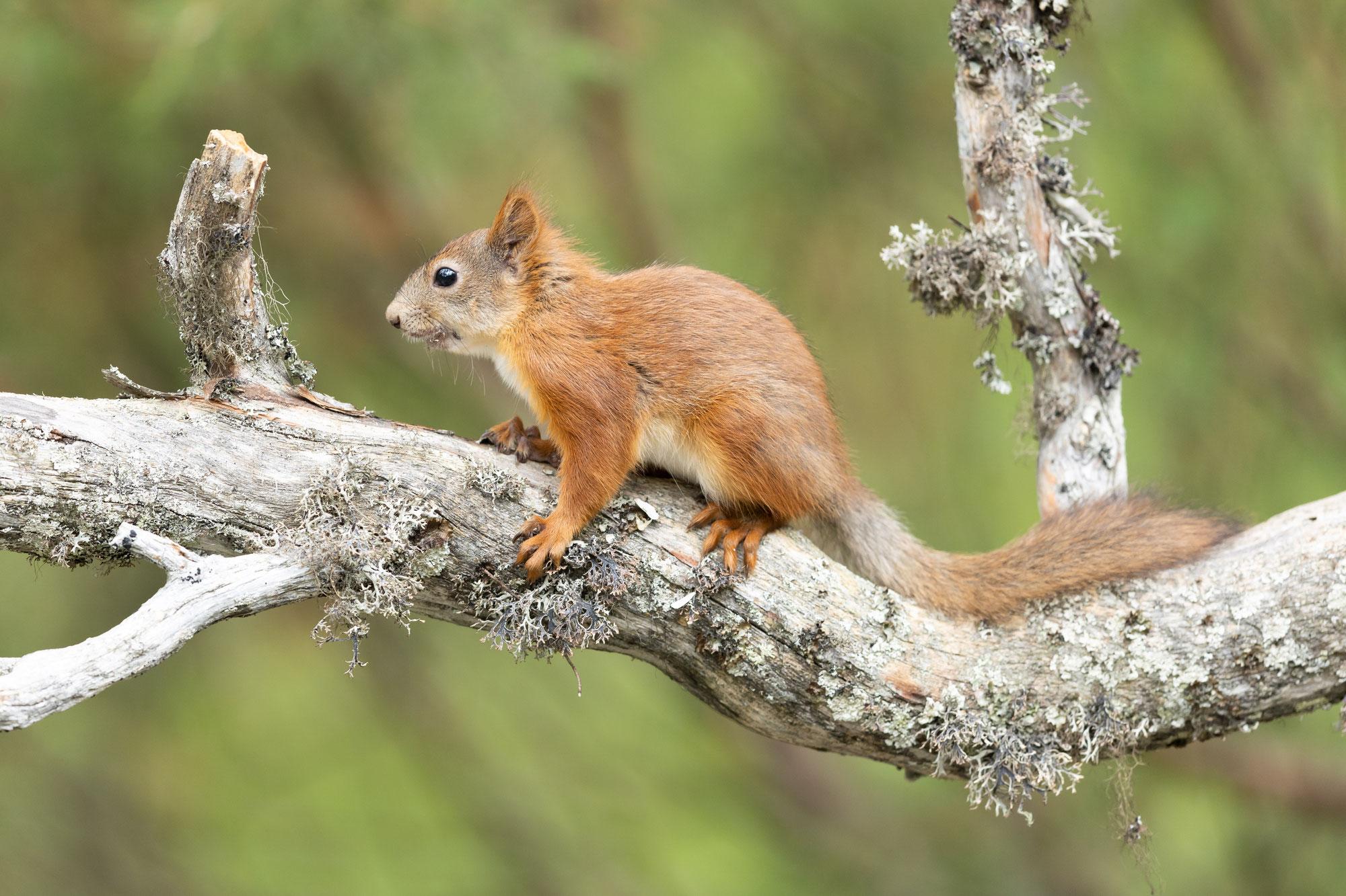Finnlands wilde Tiere - Finnish wildlife
