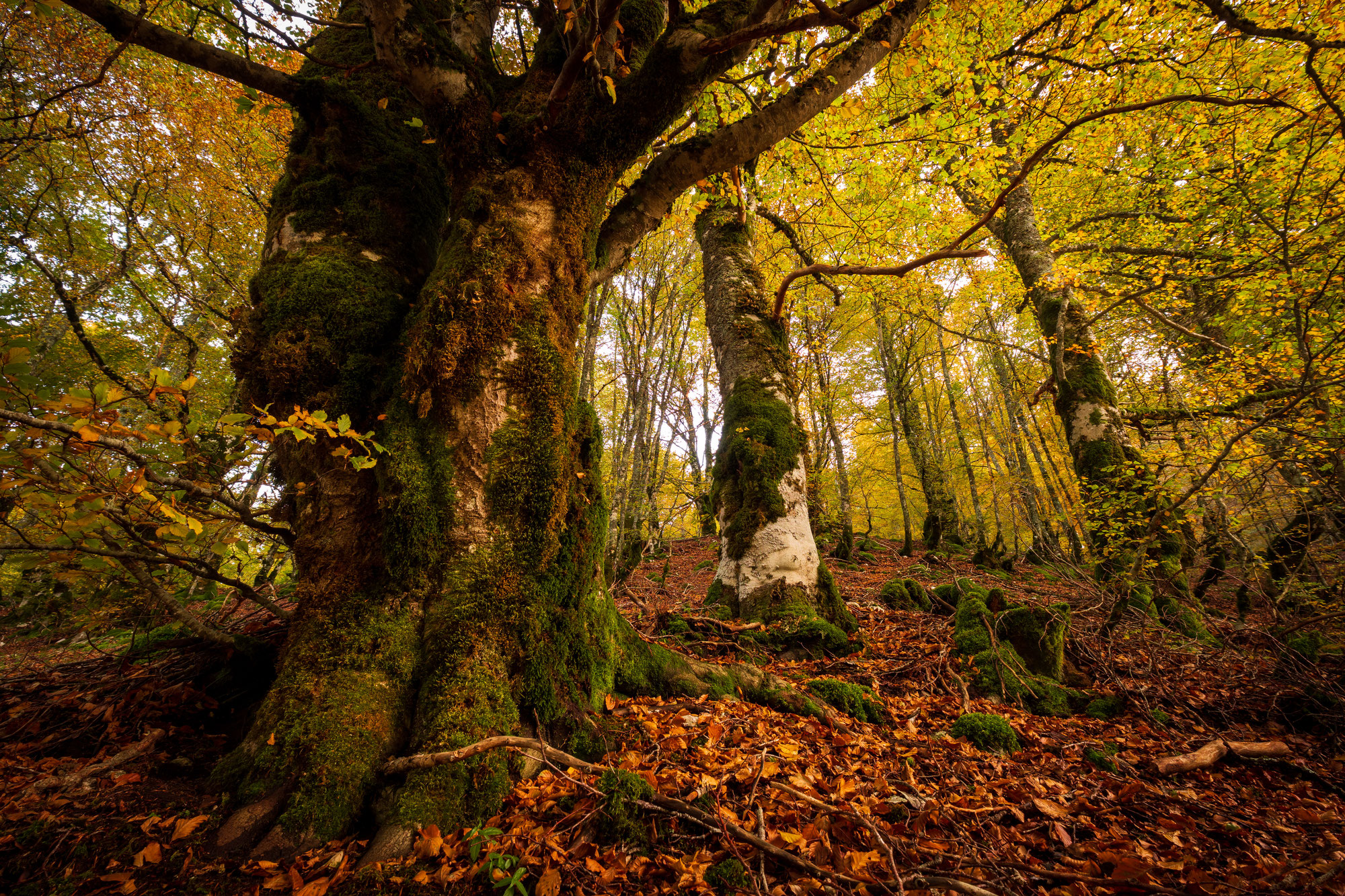 Abruzzen Teil II: Phantastische Baumwesen und wo sie zu finden sind