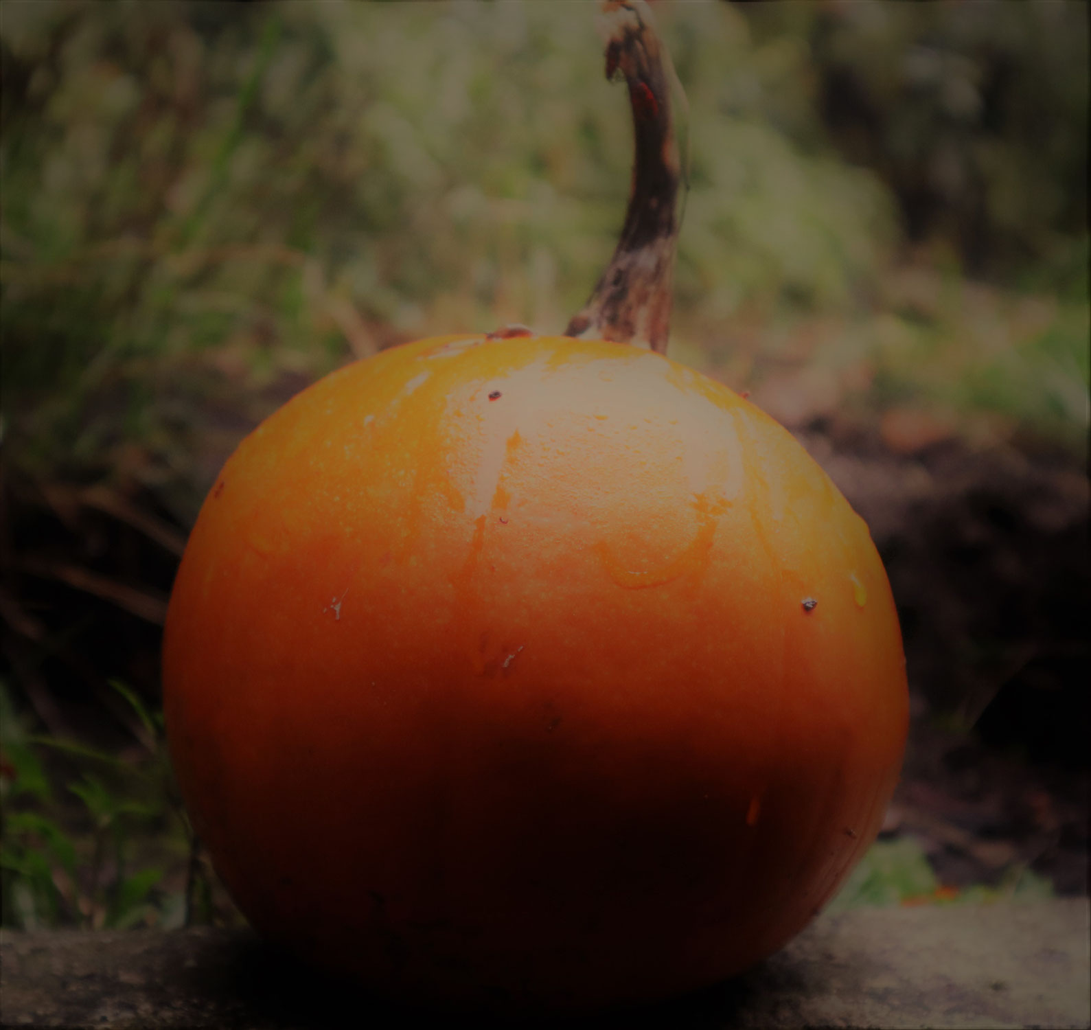 Halloween -  The Transformational Magic of Pumpkins