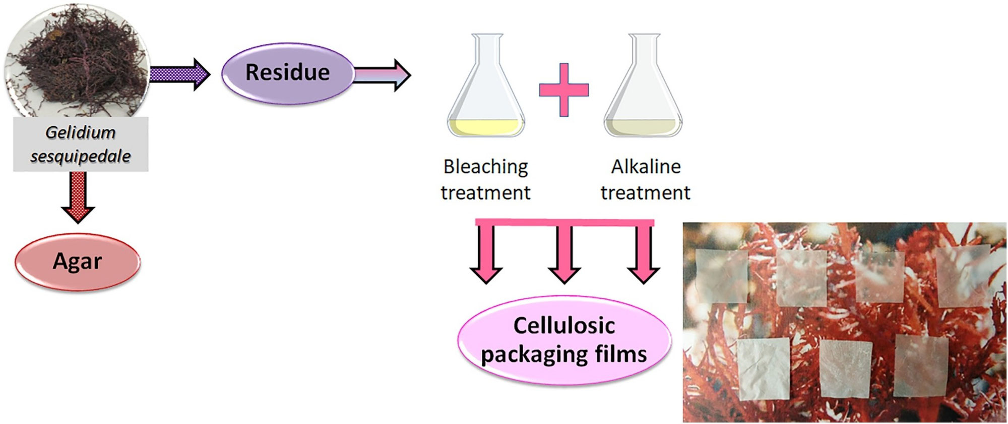 Improved performance of less purified cellulosicfilms obtained from agarwaste biomass