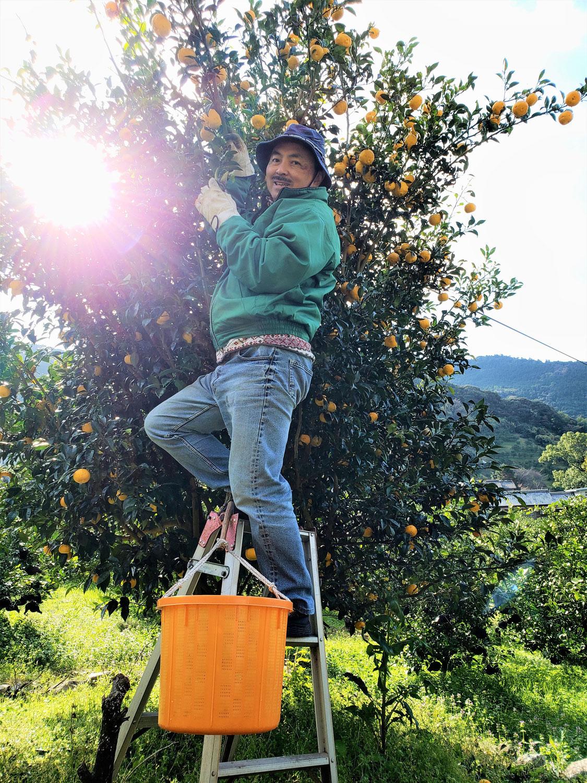柚子採りに来いやー!