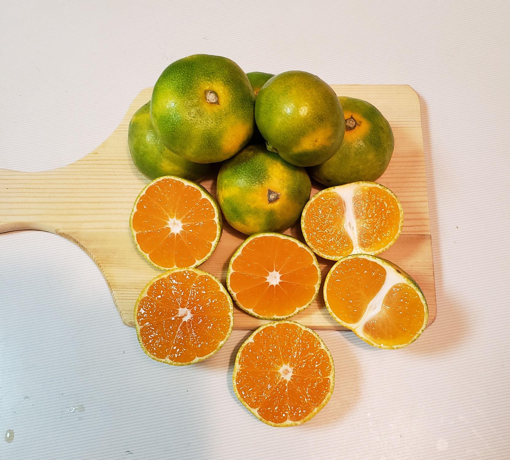 柑橘のシーズン到来
