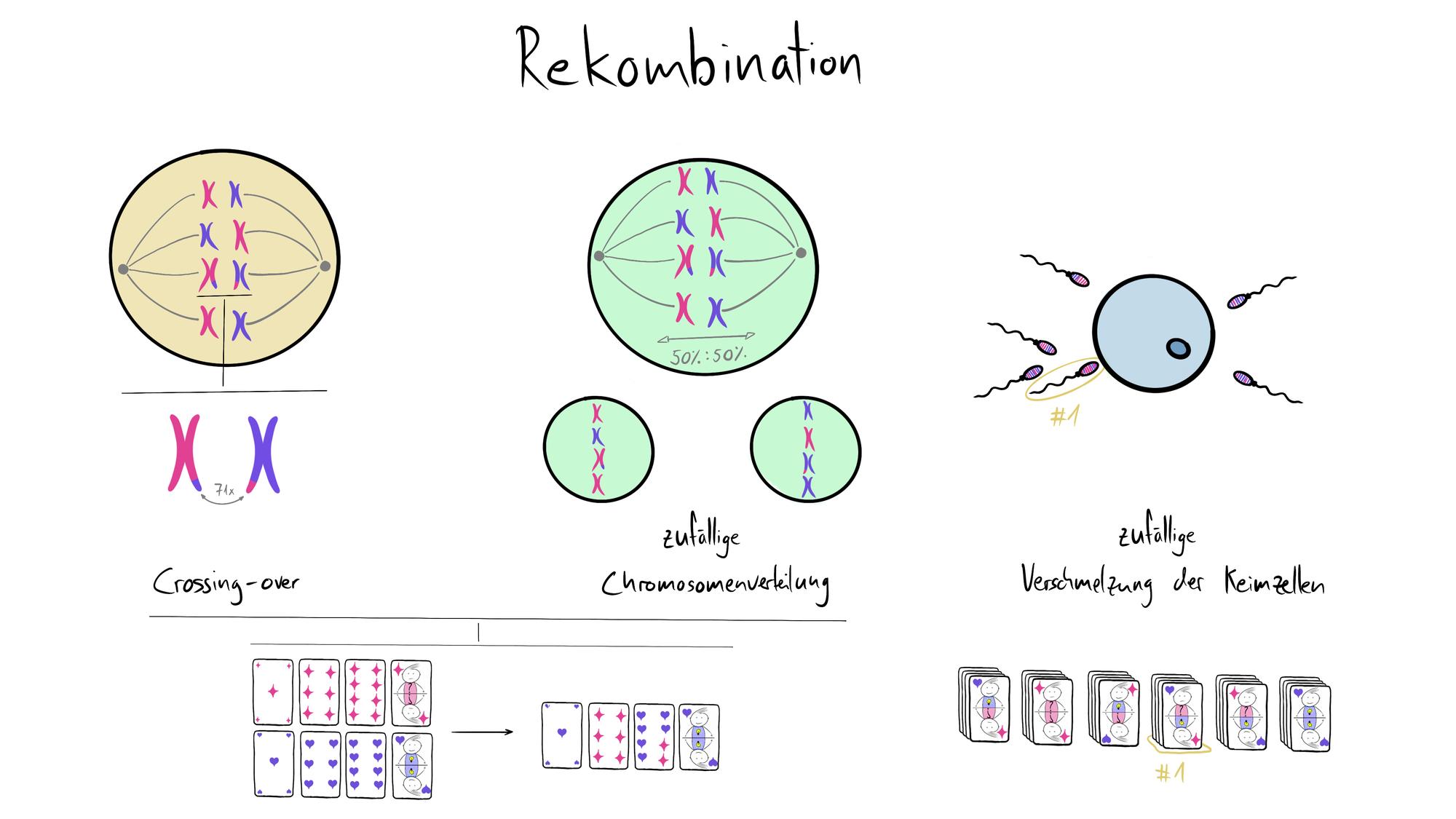 Rekombination