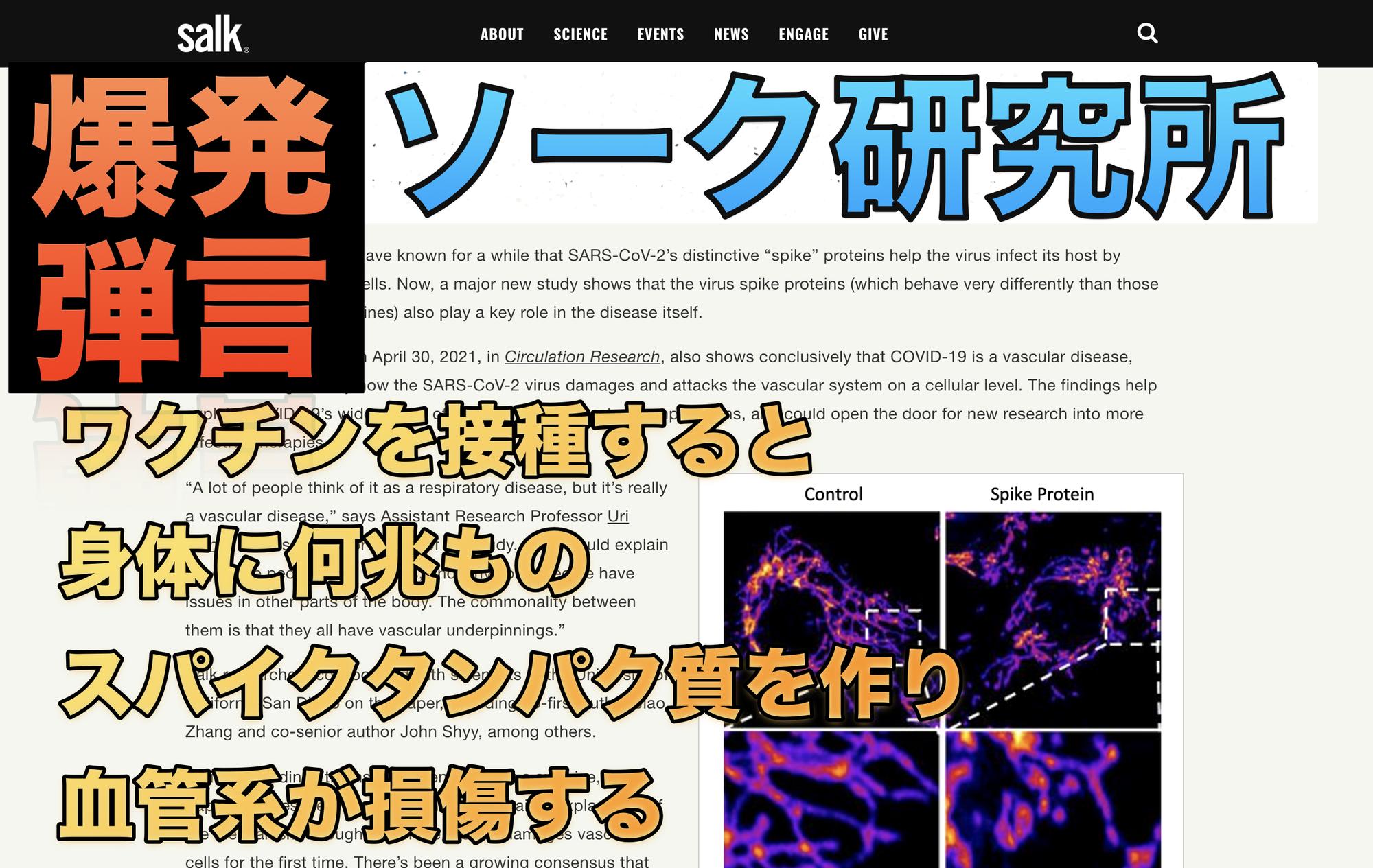 【コロナワクチンの真相】ソーク研究所「新型コロナウイルスのスパイクタンパク質がさらに重要な役割を果たしている」
