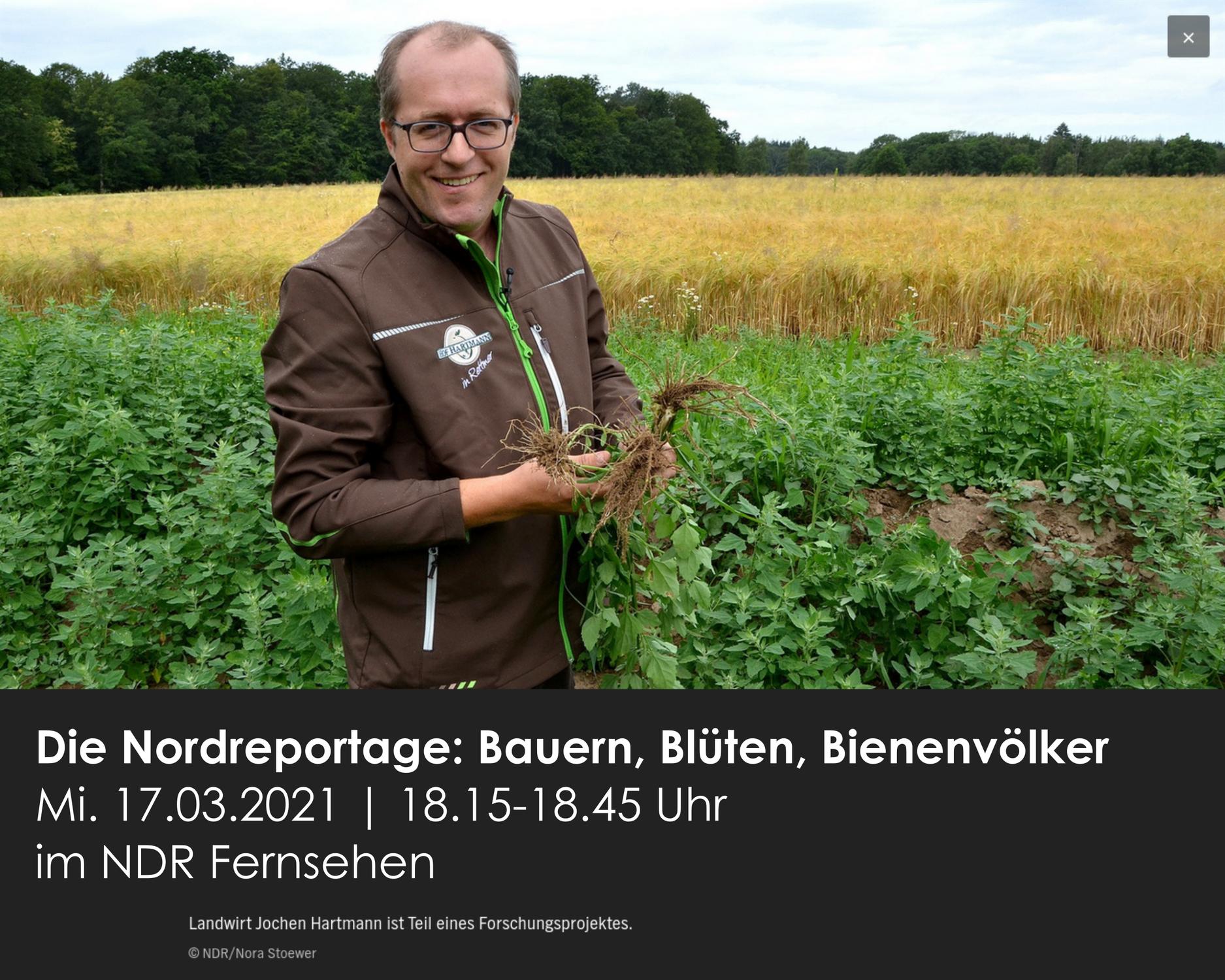 Beetle Banks, Blühstreifen, Biodiversität: Hof Hartmann in der NDR Nordreportage