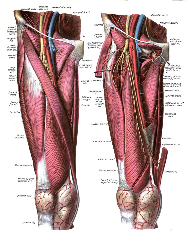 足腰を鍛えるとは筋肉以外にも効果的