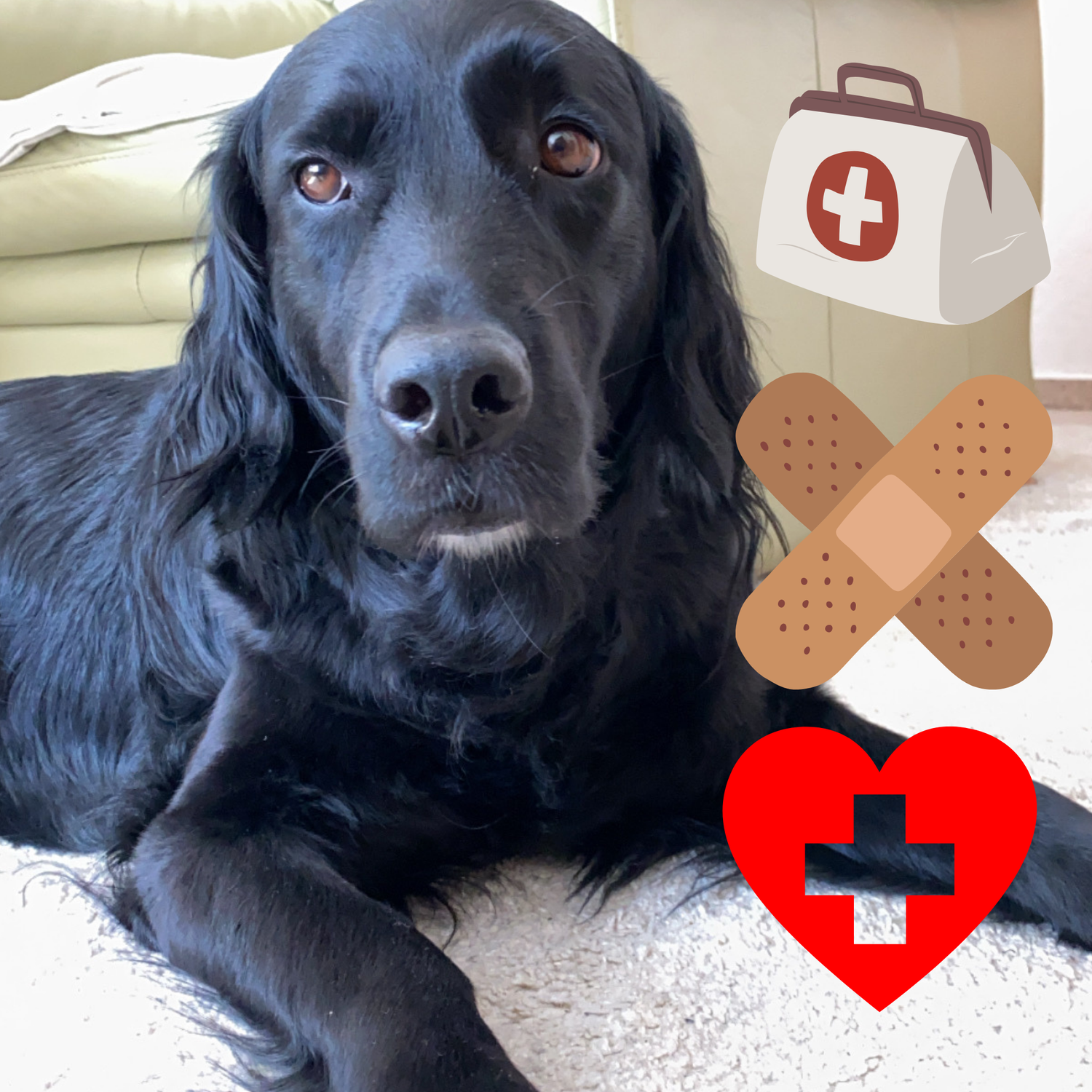 >>Medical Training mit Hunden: so geht's – Teil 2<<
