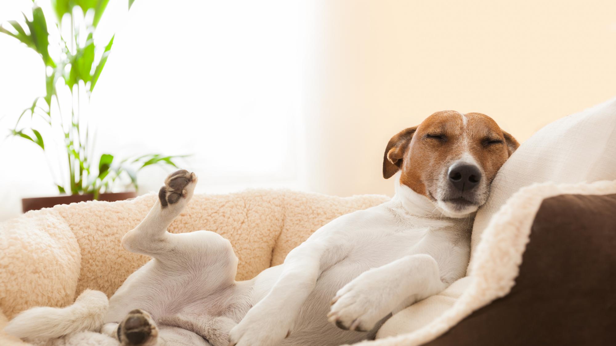 Ätherische Öle für Hunde?