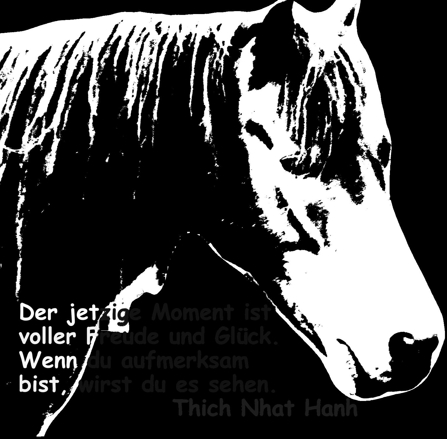 Achtsamkeit mit Pferden