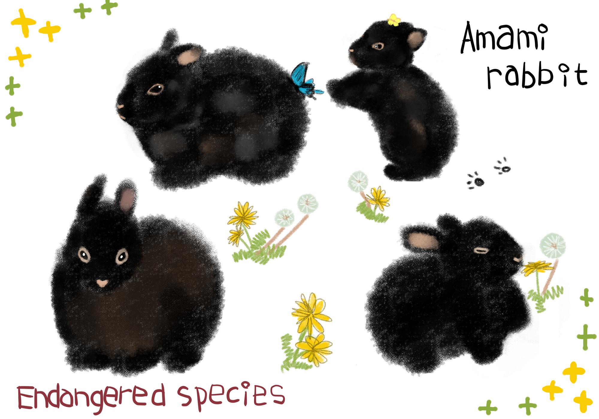 真っ黒な特別天然記念物「アマミノクロウサギ」