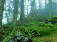 Bayrischer Wald