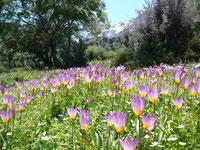 Frühlingstour ins Gebirge