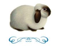 Особенности покупки кролика в Москве