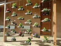 Agricultura Urbana Natural
