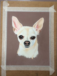 portrait animaux