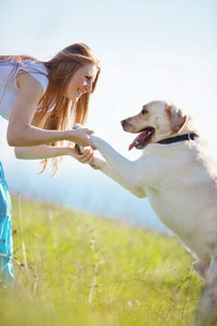 Hundeschule weißer Hund