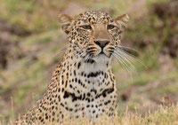 ザンビア 動物たち