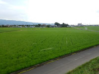 甘鉄車内から眺める、緑の絨毯